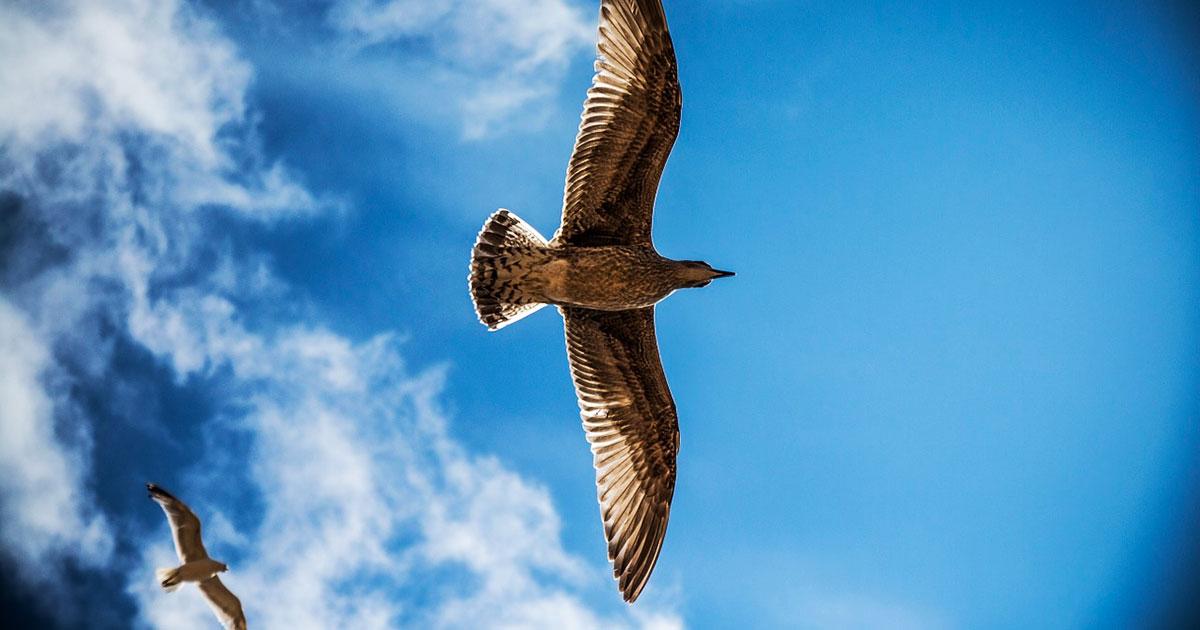 «У каждого своя высота полёта» — мудрый текст Игумена Евмения