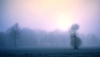 «Февральское нежное утро» — теплое зимнее стихотворение Луизы Медведевой