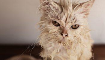 «Он мне расцарапал не тело, а душу» — сильное стихотворение об уродливом коте