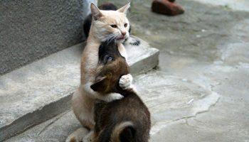Кажется, реинкарнации всё-таки существуют. Или этому коту нужно в МЧС работать. До слёз